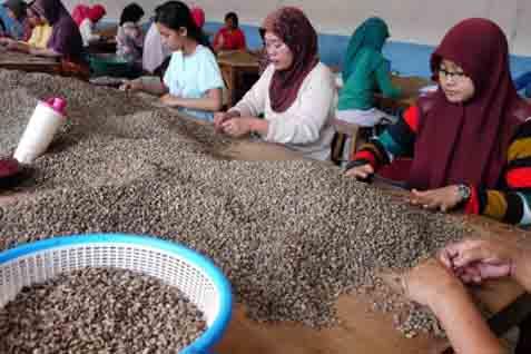 Pemprov Lampung Batasi Ekspor Kopi Bermutu Rendah