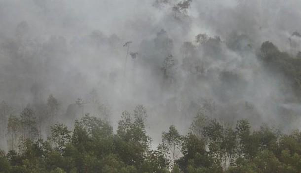 7 Perusahaan Jadi Tersangka Pembakaran Lahan Dan Hutan
