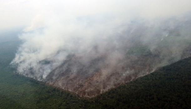 1.400 Hektare Konservasi Terbakar, Tahun Ini Terparah