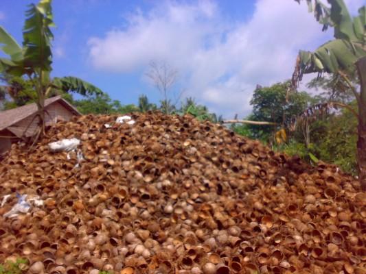 Batok kelapa | ist