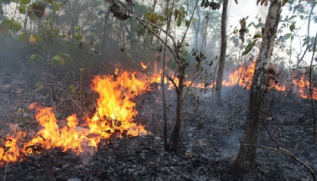 Kebakaran hutan | ist