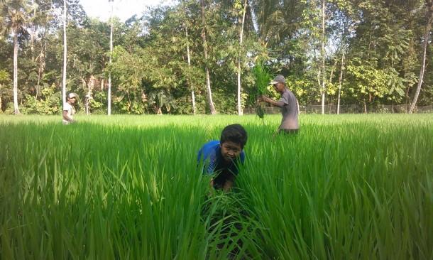 Meski kemarau, petani  di Dusun Pulodawong, Desa Way Mili, Kecamatan Gunung Pelindung, Lamtim tetap bercocok tanam. | Winar/Jejamo.com