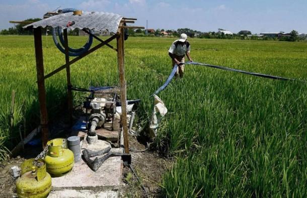 Petani Lampung Barat Harapkan Bantuan Sumur Bor