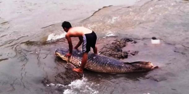 Bangkai Ikan Raksasa Hebohkan Warga Bogor