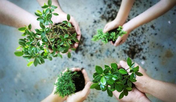 Perbanyak Ruang Terbuka Hijau, Pemkab Lampung Timur Tanam Pohon