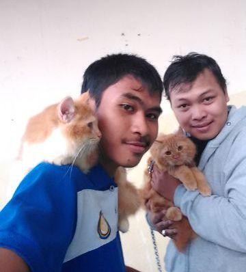 Ingin Memenangkan Kontes Kucing? Penuhi Kriteria Ini