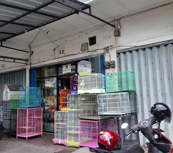 Kiat Memelihara Hewan Peliharaan Ala Pet Shop Lucky Star