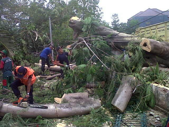 Sebuah pohon flamboyan di Jalan Gatot Subroto, Kelurahan Tanjunggading tumbang akibat hantaman angin kencang, Selasa 10/11/2015. | Andi/Jejamo.com