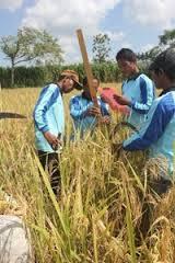Salah satu aktivitas sejumlah aktivis Yabima Indonesia bersama petani di Kota Metro. | Andi/Jejamo.com