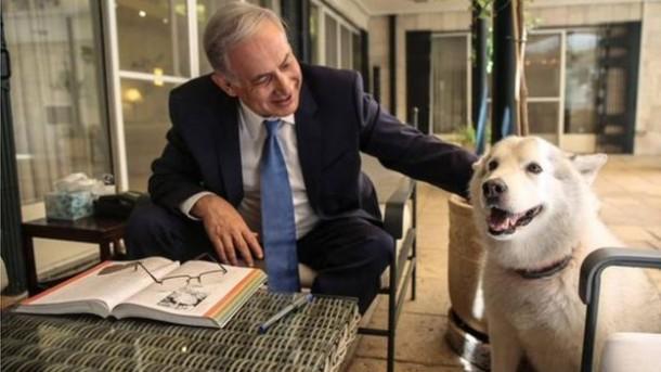 Anjing Netanyahu