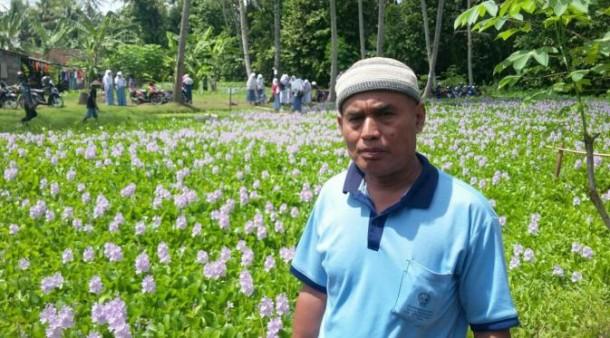 Setelah Amarilis Kini Heboh Taman Bunga Eceng Gondok di Yogyakarta
