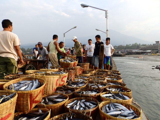 Tanggamus Kotaagung Surga Ikan Laut Enak