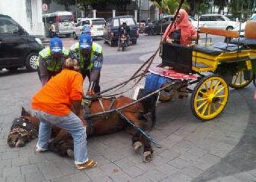 Belasan Kuda Terjatuh di Titik Nol Kilometer Yogyakarta