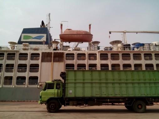Sapi Impor PT Austasia-Santori Turun di Pelabuhan Panjang
