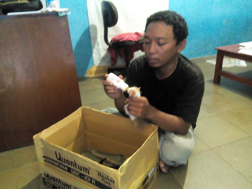 Sibuk Liputan Pilkada Lampung, Jurnalis Ini Urus Anak Kucing Buangan Orang