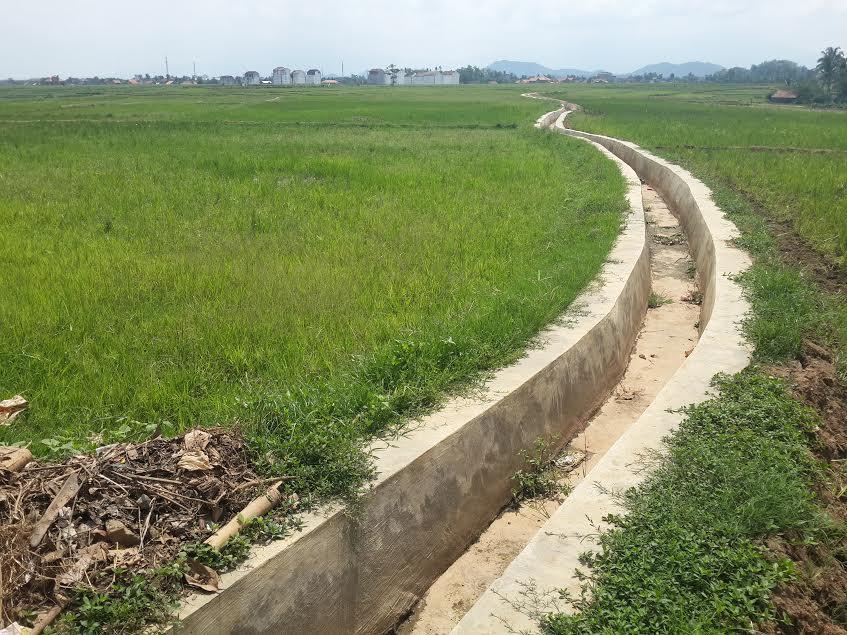 Sejumlah petani di Pringsewu masih enggan menanam padi, dan lebih membiarkan sawahnya ditumbuhi rumput, lantaran intensitas hujan dan pasokan air belum stabil. | Nur Kholik/Jejamo.com