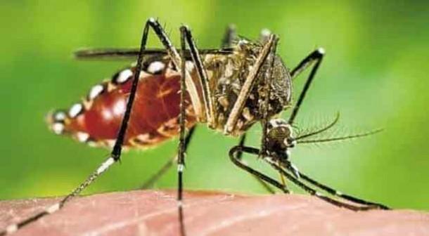 Ini Gejala Serangan Virus Zika dan Perbedaannya dengan DBD