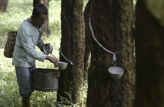 Stabilkan Harga Karet, Dishutbun Lampung Timur Gandeng Perusahaan