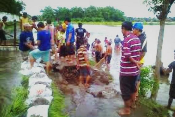 Puluhan hektar sawah di Kecamatan Batanghari Nuban, Lampung Timur terendam banjir akibat jebolnya tanggul di daerah setempat sepanjang lima meter | Wahyu/jejamo.com