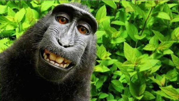 Selfie Monkey