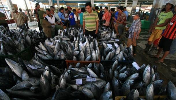 Jumlah Ikan di Dunia Saat Ini Hanya Setengah dari Tahun 1950
