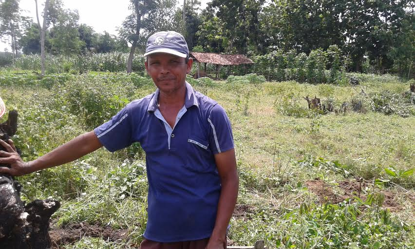 Tergiur Keuntungan, Wardi Jalankan Usaha Penggemukan Sapi di Lampung Tengah