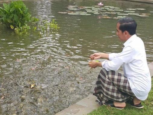 Jokowi Memberi Makan Ikan