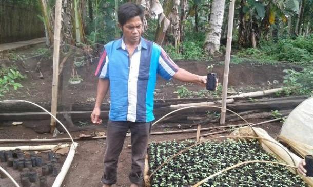 Budi daya pepaya California sudah mulai dikembangkan petani di Tanggamus. Salah satunya Ahmad di Desa Argopeni. Foto dibidik Rabu, 24/2/2016. | Adrian Arlambang/Jejamo.com