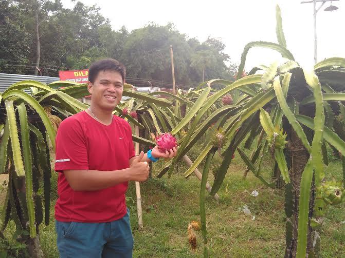 Wibowo saat berada di kebun buah naga organik milinya | Wahyu/jejamo.com
