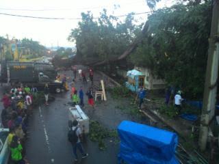 Breaking News: Tiga Rumah di Telukbetung Porak Poranda Ditimpa Pohon Kelapa Tumbang