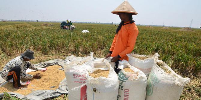 Produksi padi | ist