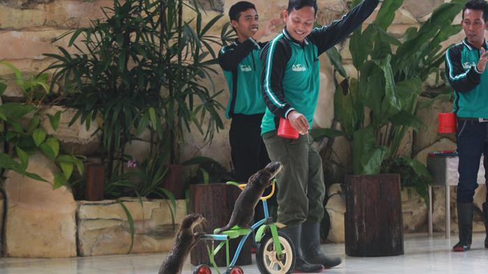 Pentas Satwa Taman Wisata Lembah Hijau Lampung Favorit Pengunjung