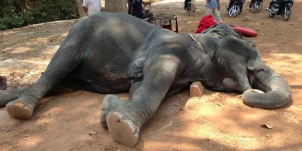 Gajah Sambo