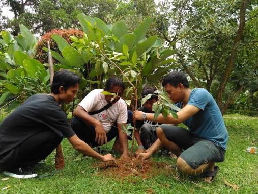 Penanaman pohon salam