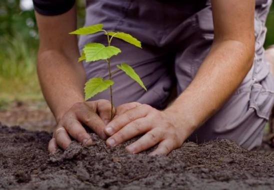 BPLHD Bandar Lampung: Momen Hari Bumi Harus Dimanfaatkan untuk Menanam Pohon