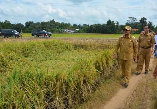 Wabup Lampung Tengah: Kami Siap Tingkatkan Produktivitas Pertanian