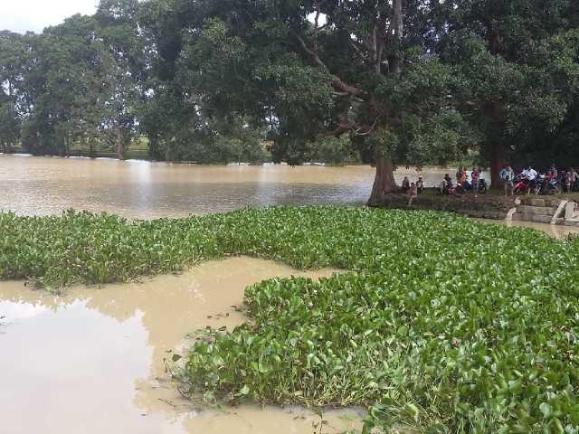 Inilah penampakan objek wisata Dam Raman Metro Utara yang banyak ditumbuhi eceng gondok. | Tyas/Jejamo.com