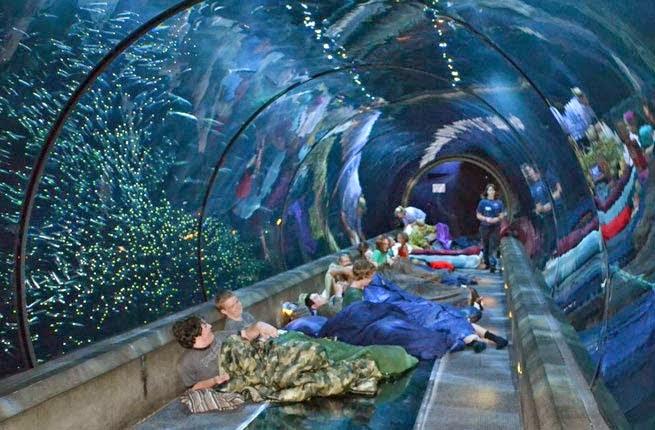 Paris Aquarium Adakan Kontes Tidur Bareng 35 Ikan Hiu, Berani?