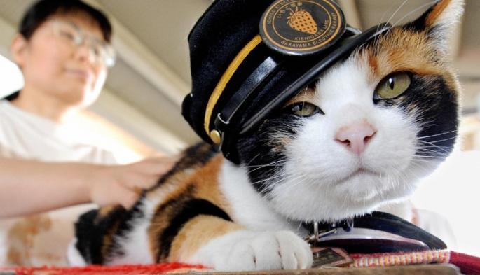 Kontes kucing (Ilustrasi). | Ist.