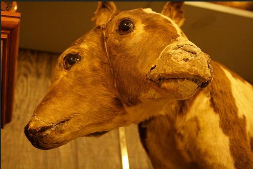 Museum binatang berkepala dua (Ilustrasi). | Ist.