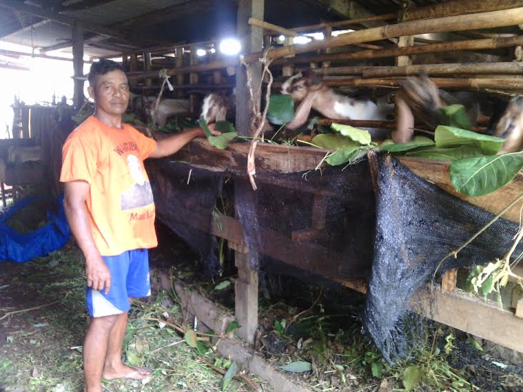 Sugiyanto, peternak kambing di Lampung Timur. | Parman/Jejamo.com