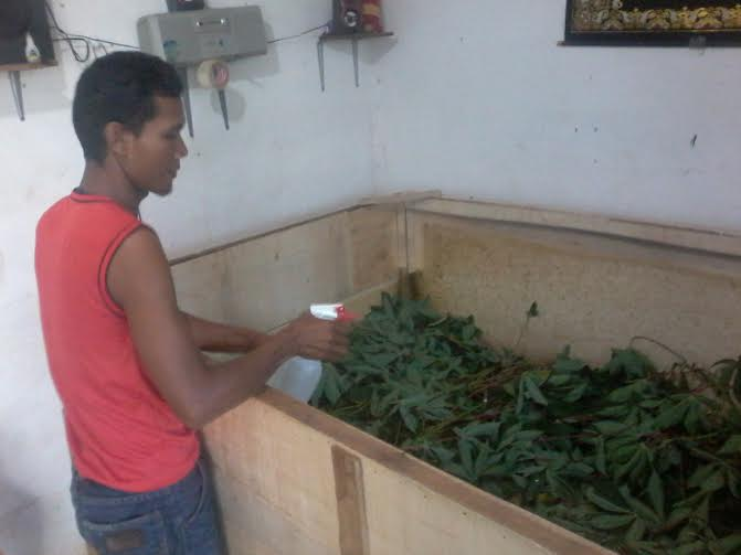 Manab sedang beri minum jangkrik dengan disemprot | Mukaddam/jejamo.com