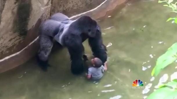 Gorila Menguasai bocah 4 tahun