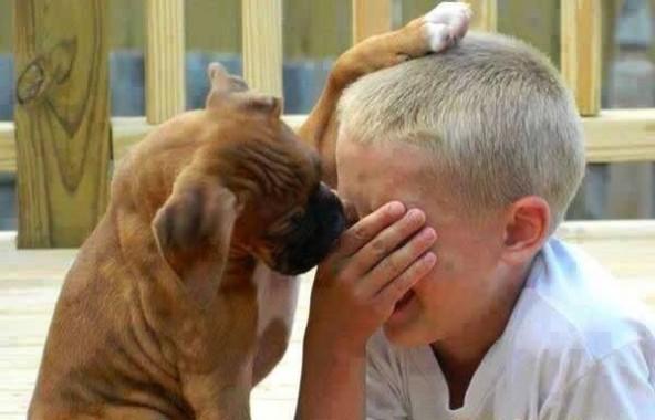 Anjing Ternyata Mampu Merespon Ketika Majikannya Menangis