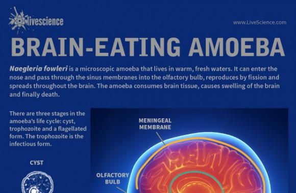 Remaja Putri di Amerika Tewas Setelah Otaknya Digerogoti Amoeba
