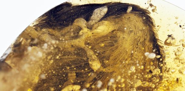Peneliti Temukan Sayap Burung Purba Utuh di Batu Ambar