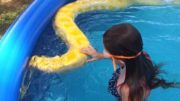 Berenang bersama ular Pyton