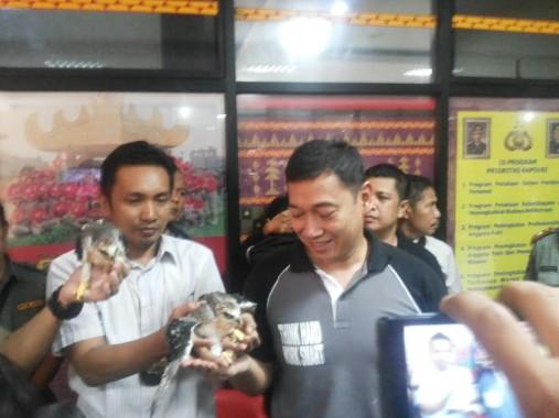 Jual 20 Ekor Elang Tikus, Boim Warga Enggal Ditangkap Polda Lampung-BKSDA