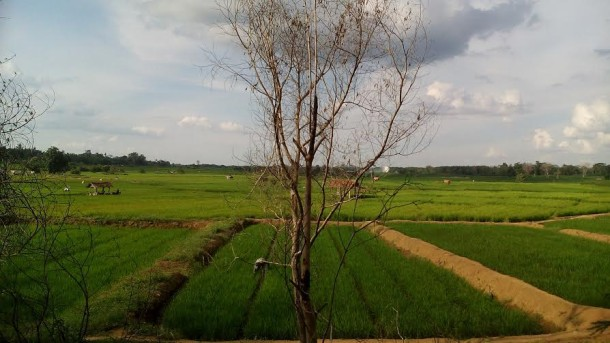 Petani di Wonomarto Kotabumi Berhasil Kembangkan Pertanian Organik