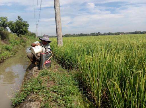 Rifai, seorang petani di Desa Banjarrejo, Batanghari, Lampung Timur, siap menyemprot sawahnya yang diserang tikus dan wereng, Minggu, 17/7/2016. | Suparman/Jejamo.com